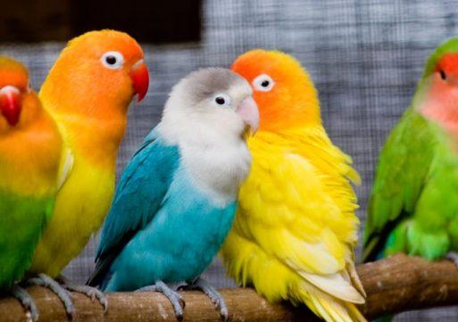Jaarlijkse Vogelshow in Waspik