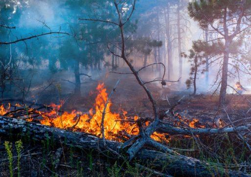 Natuurbrand in Loonse en Drunense Duinen