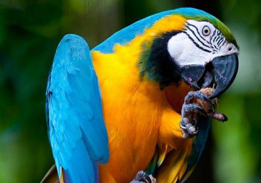 Brandweer redt papegaai met hoogwerker en pinda's
