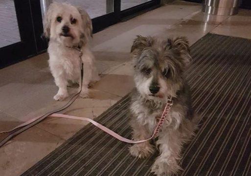 Nieuw baasje voor in De Els gedumpte hondjes